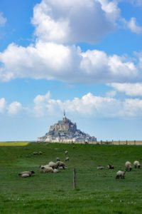 moutons du mont saint michel