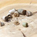 Graines de pavot fleur de pavot