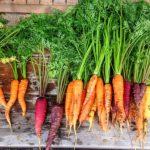 Carottes de couleurs, fanes de carottes